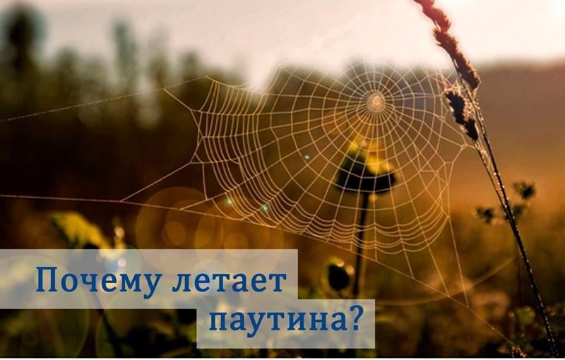 почему летает паутина