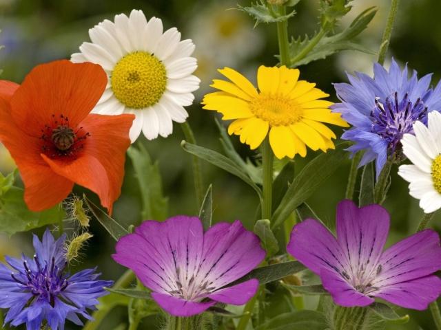 "2Игра для детей на природе ""цветок и листок"