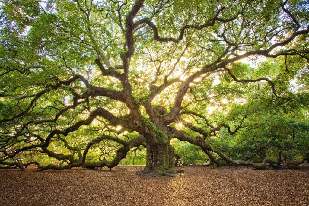 Ребусы про деревья для детей